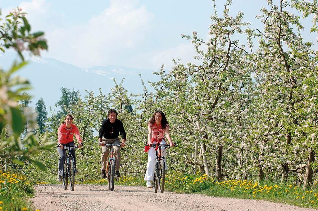 Der Etschtal Radweg für Genussbiker
